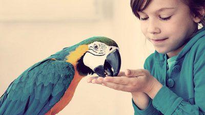пернатый домашний питомец. Попугай и ребенок