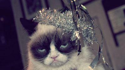кот после нового года