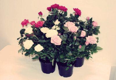 Романтические подарки к 8 Марта