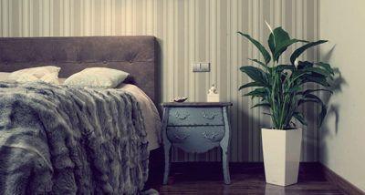 комнатные растения от пыли