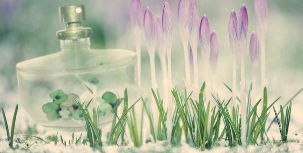 цветочные ароматы духов для женщин