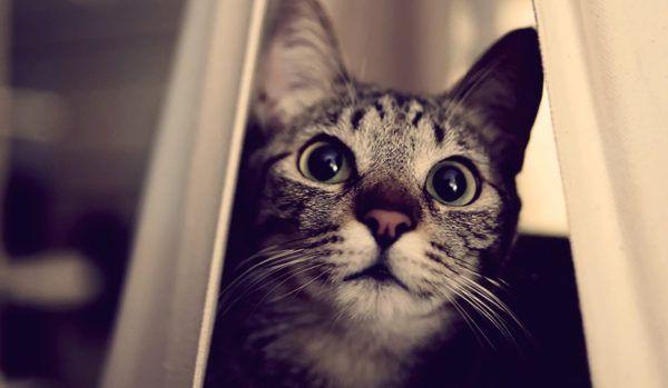 6 привычек, которым стоит поучиться у котов