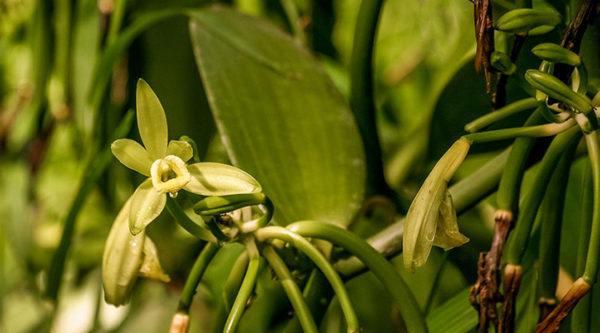 Что такое селективная парфюмерия и нишевые ароматы