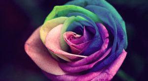 Значение цвета в жизни человека