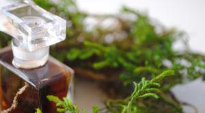 древесные ароматы